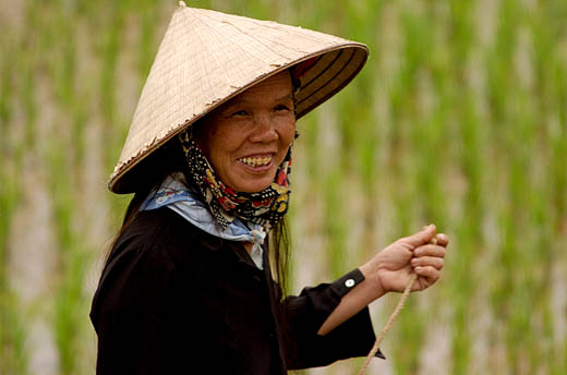 Chinese Rice Hat Chinese Rice Farmer Ha...